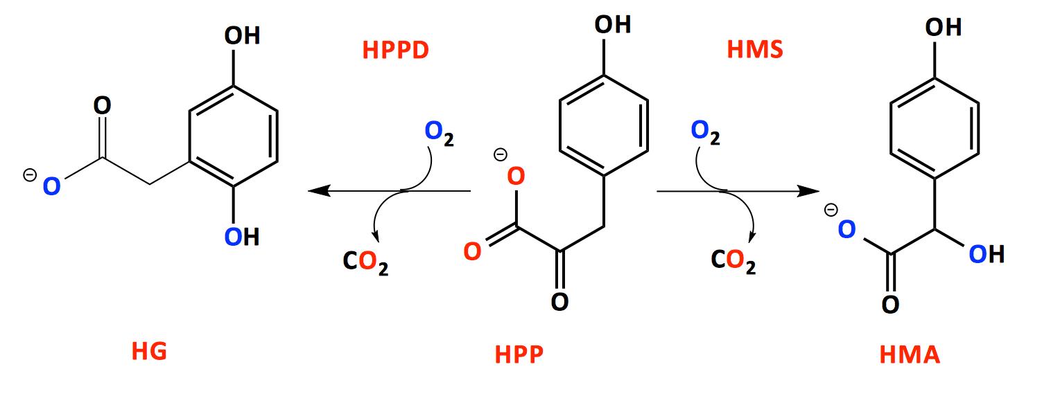 https://uwm.edu/chemistry/wp-content/uploads/sites/194/2015/03/Graham-Moran-Profile-Image-1.png