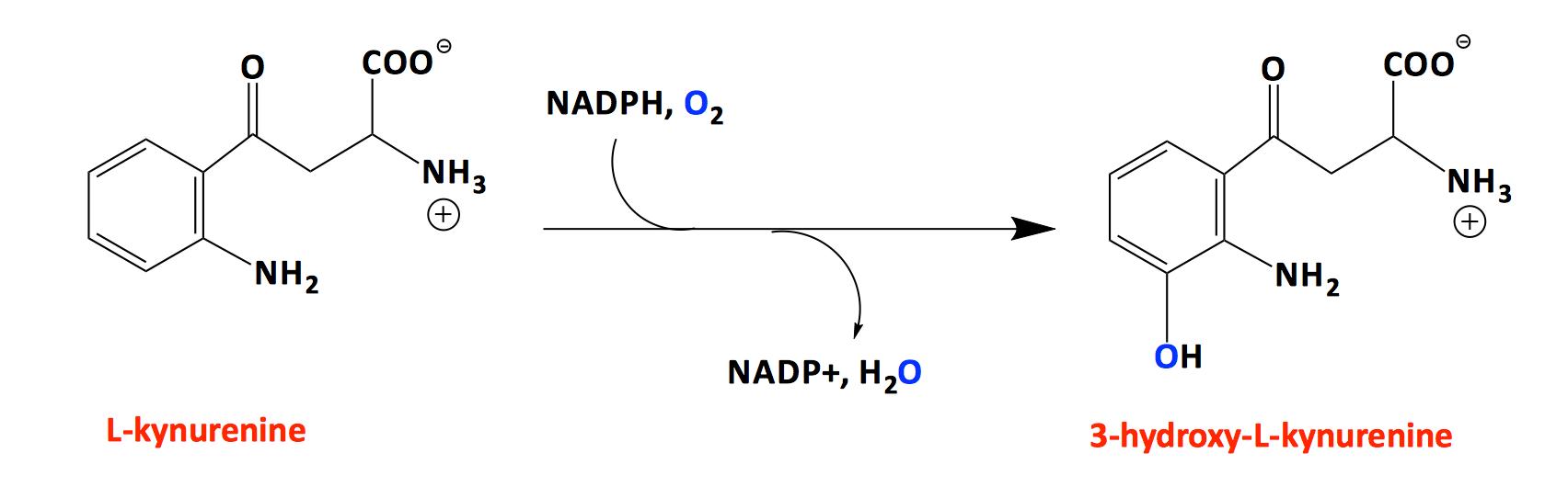 https://uwm.edu/chemistry/wp-content/uploads/sites/194/2015/03/Graham-Moran-Profile-Image-2.png