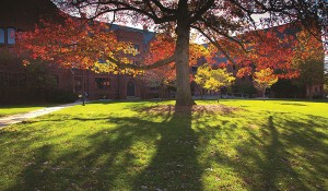 A tree by Garland Hall in fall colors.
