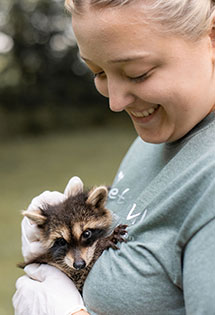 Allison Hoffman holding and petting a baby racoon.