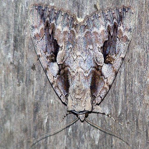 moth-madness-3
