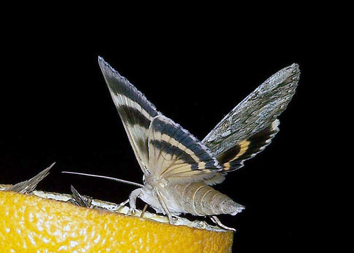 moth-madness-4