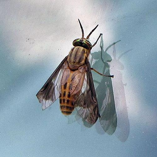 a-few-flies-3