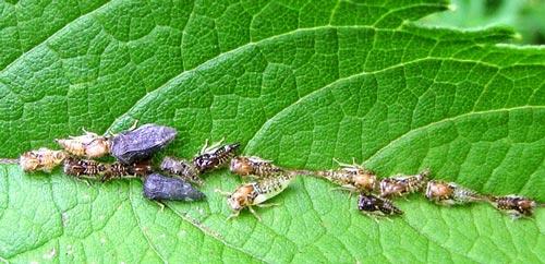 treehopper-family-1rz