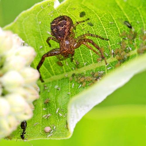 crab-spider-tableaux13-1sm