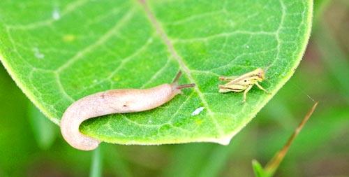 chr-slug-tabeaux13-4rz