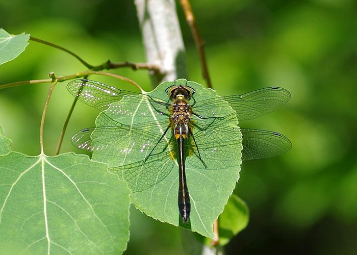 emerald-rckt-1