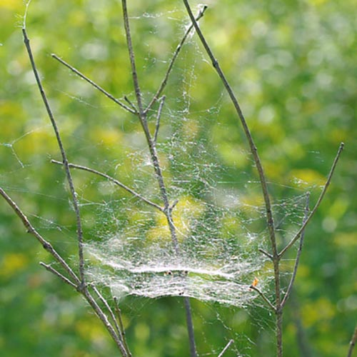 The Wonders of Webs I - Spider Silk | Field Station