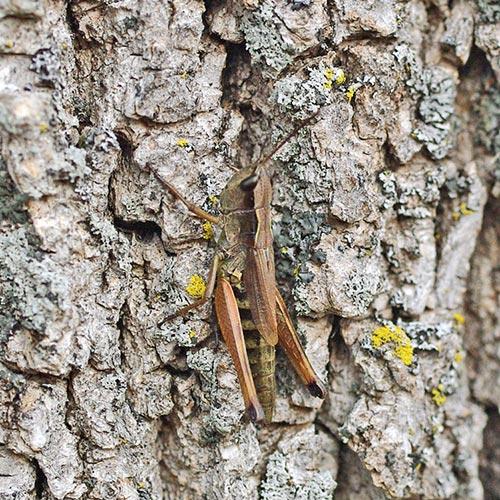 grasshopper-meadow11-9bsm
