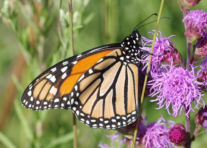 monarch14-9arz-700