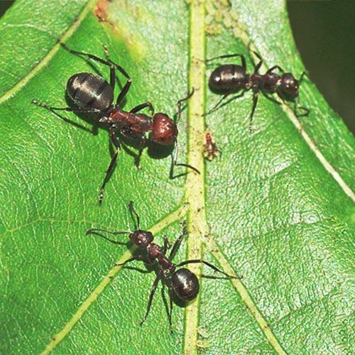 ants-farming10-7rz