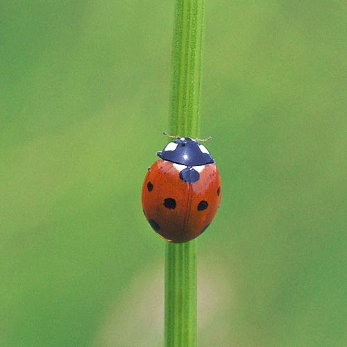 ladybug-7-lnd11-6rz