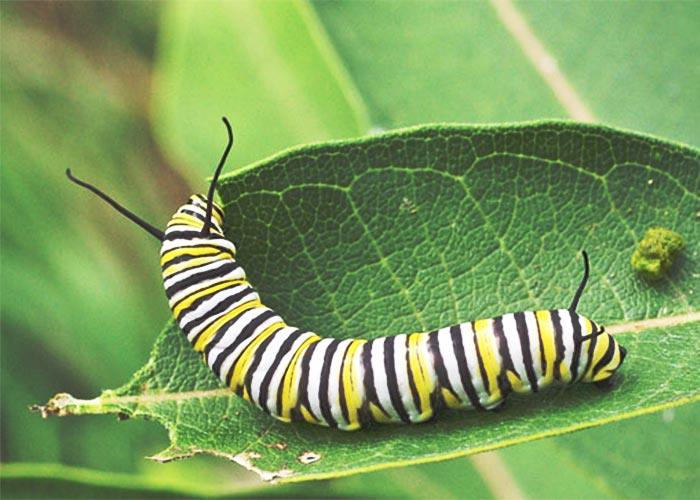 monarch-cat10-7rz