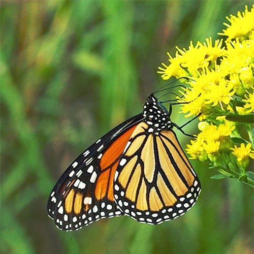 monarch10-17rz