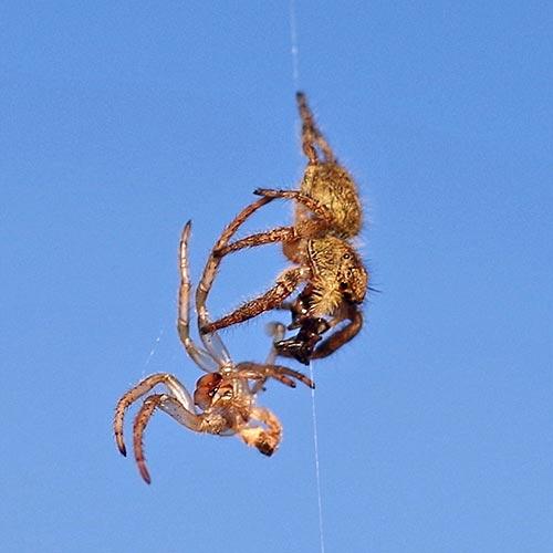 c11-jumpng-spider16-25