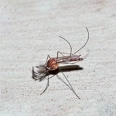 mosquito-m11-1rz