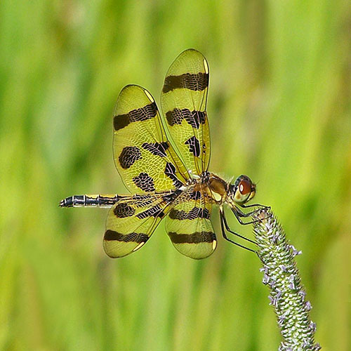 dragonfly-2-3