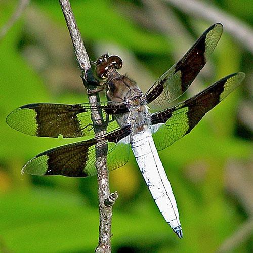 dragonfly-2-4