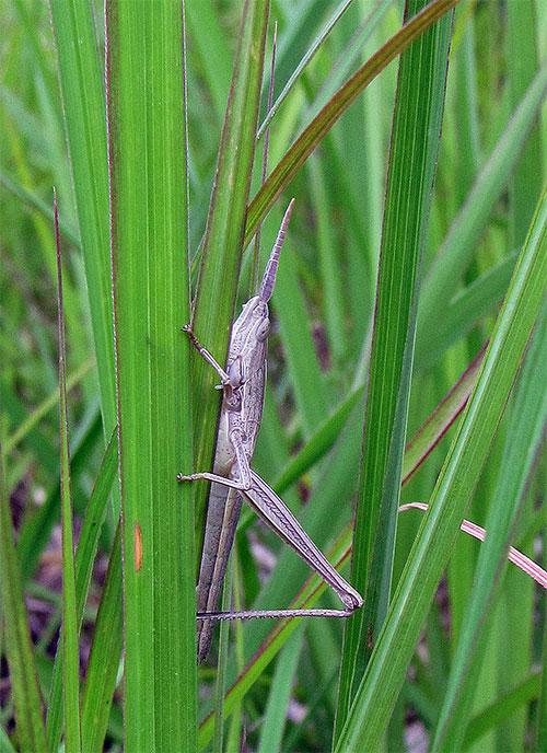A grass-hugger