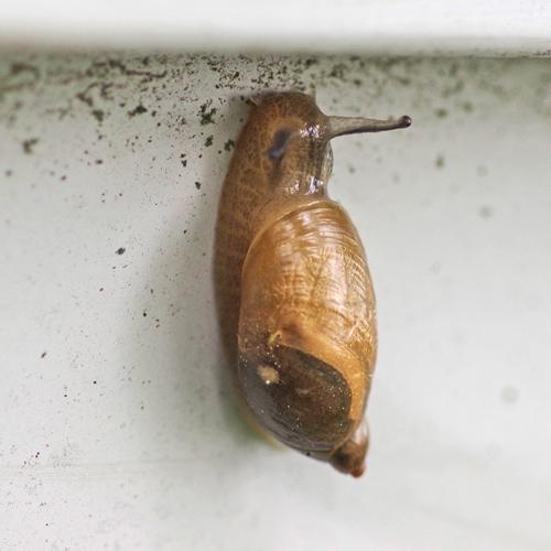 snail climbing a wall