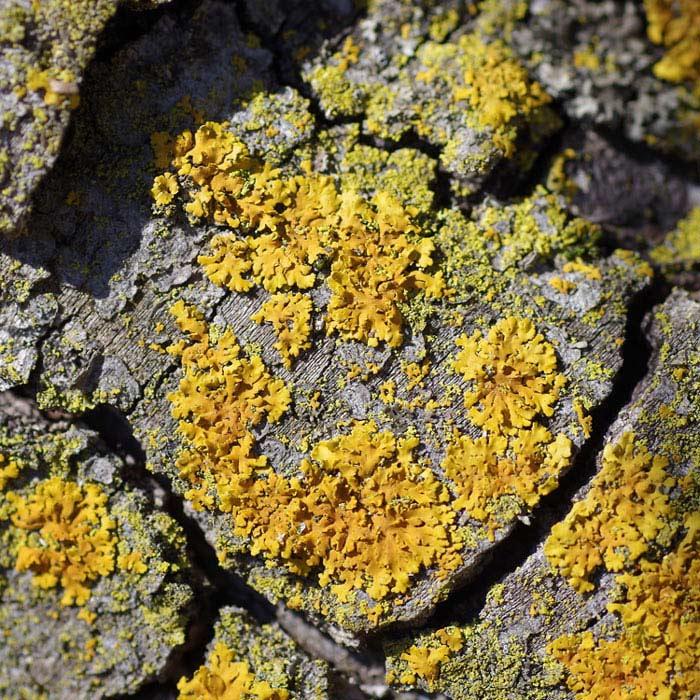orange lichen on rock