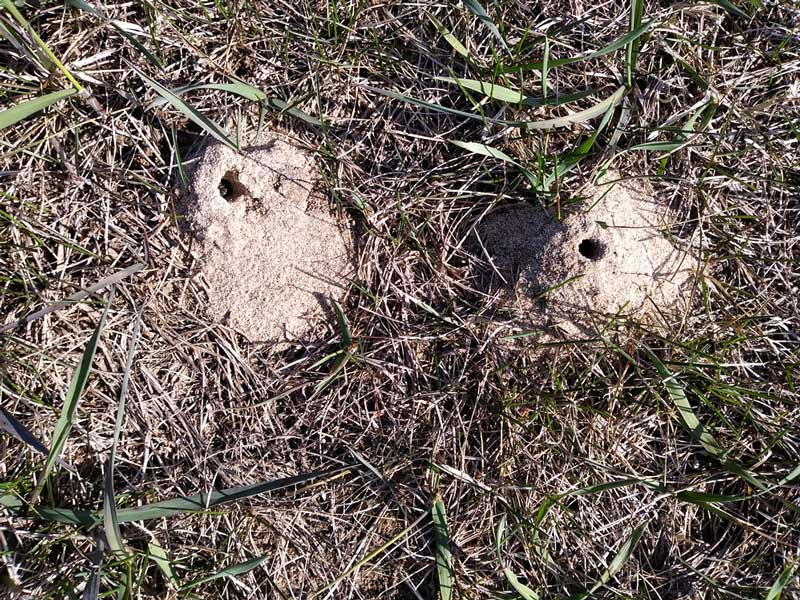 cellophane bee holes in the ground