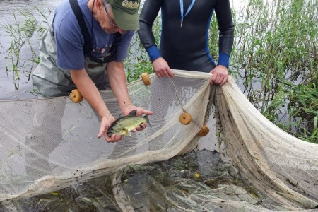 fresh water scientists and graduate students study fish caught in river