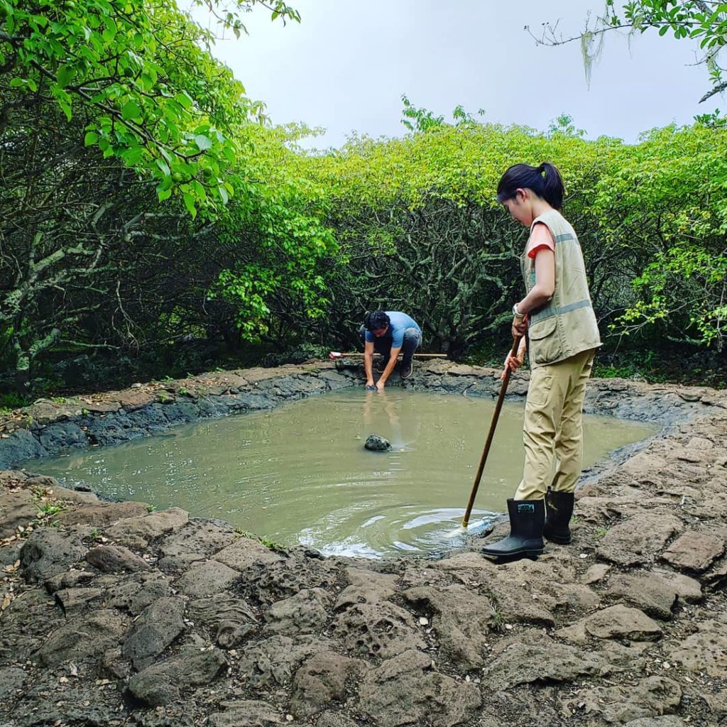 Volunteers with Projects Abroad cleaning a giant tortoise habitat