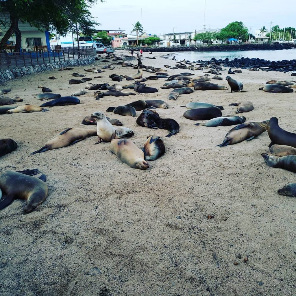 Sea lions sunning themselves on a beach in the Galapagos