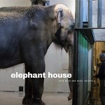 Elephant House book cover
