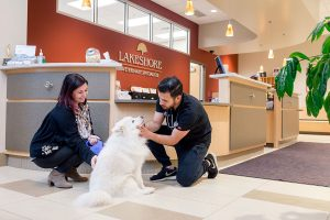Juan Orjuela says goodbye to a furry patient at Lakeshore Veterinary Specialists. Orjuela is a pre-vet student at UWM.