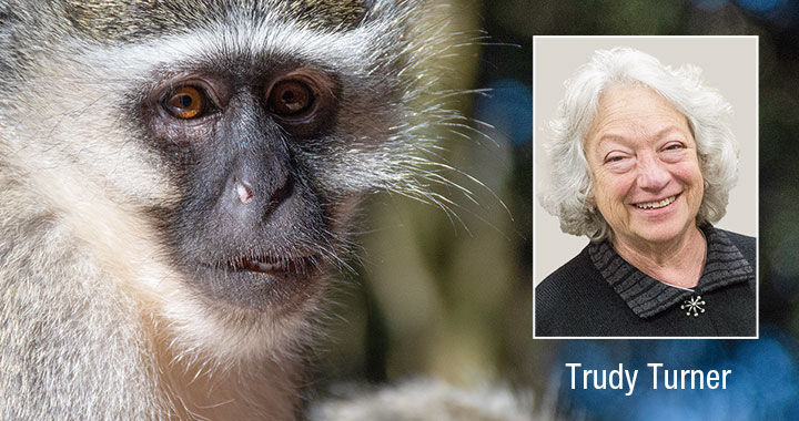 Trudy Turner and Vervet Monkey