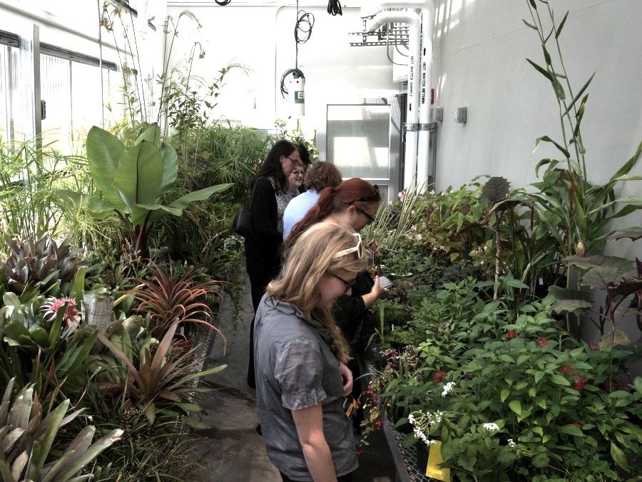 Libraries staff admiring plants