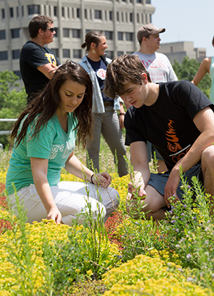 Restaurant Operations maintain gardens atop Sandburg Hall, which provide fresh herbs for the food that faculty, staff and students eat daily.