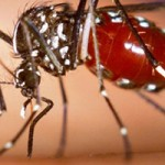 UWM faculty members will discuss the Zika virus at 3 p.m.in Bolton Hall.