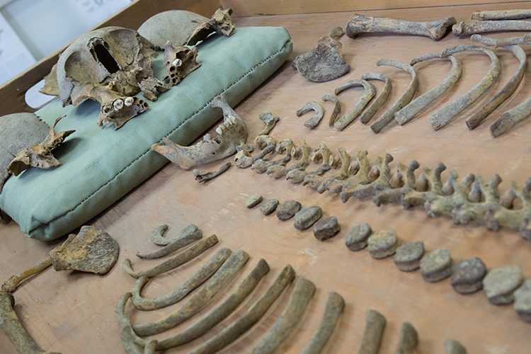 In its home in Sabin Hall, the UWM Cultural Resource Management program archives and studies the remains and artifacts of Wisconsin residents from 100 B.C. to 1900 A.D.