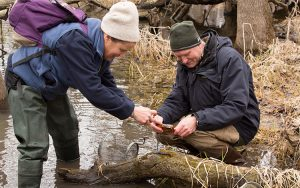 UWM biologist Gary Casper and assistant Beth Mittemaier photograph a salamander in a marsh on Milwaukee's northwest side. Their work is part of the first comprehensive survey of wildlife in Milwaukee County. (UWM Photo/Troye Fox)