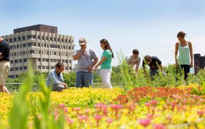 The green roof at Sandburg Hall is just one of UWM's efforts to lessen the university's impact on the environment. At the time of its installation in 2008, It was the largest green roof in Wisconsin. (UWM Photo/Troye Fox)