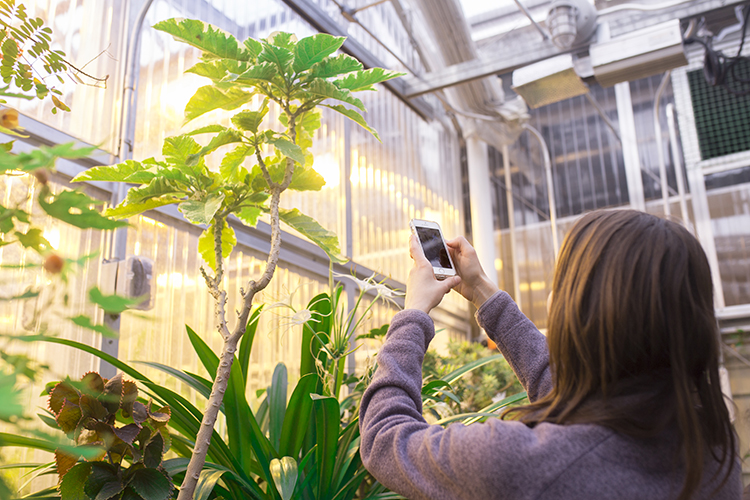 Student UWM student Sarah Sarich captures a photo of one of the greenhouse's 640 plant species. The facility boasts over 100 plant families, showcasing a range of plant biodiversity, evolution and adaption. (UWM Photo/Elora Hennessey)