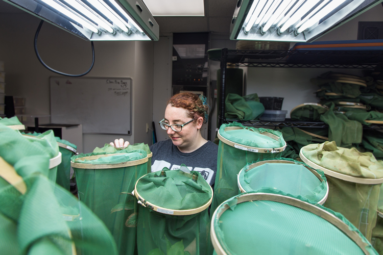 Sara Seidita examines bugs on plants.