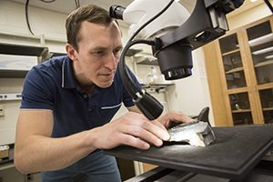 A light from a microscope shines on the sample as Gulbranson studies it.
