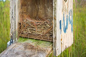 A birdhouse is half full of grass and straw.
