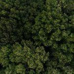 Downer Woods