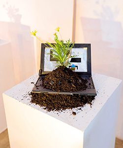 A flower grows out of a pile of dirt atop a laptop computer.