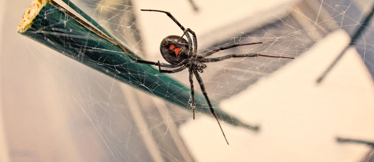 Image of spider on a web.