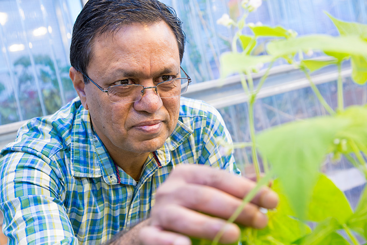 Gyaneshwar Prasad with a soybean plant.
