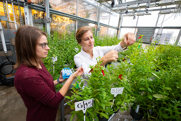 Two researchers handle plants at the UWM Field Station