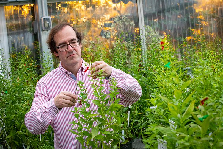 UWM professor Jeffrey Karron examines a plant.