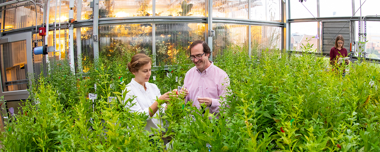 Two researchers at UWM Field Station study how plants are pollinated