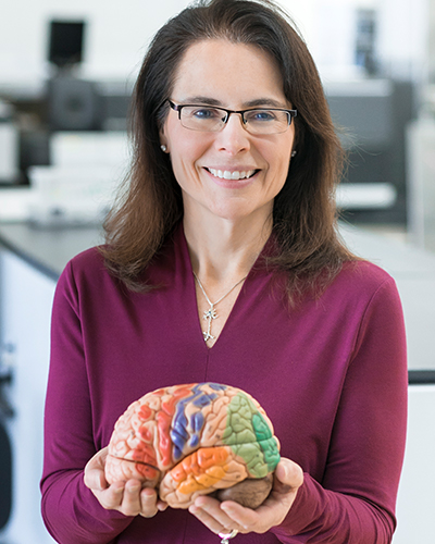 Researcher poses for portrait with model of a brain